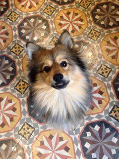Spitz Pomeranian, Corgi, Puppies, Animals, Corgis, Cubs, Animales, Animaux, Baby Dogs