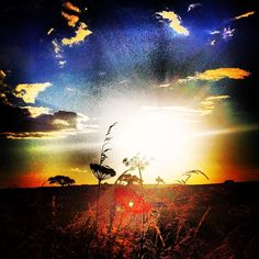 A sunset explosion leaps through the wild cow parsley waving in the summer breeze on top@of the down. #sunset #dusk #sun #explosion #flower ...