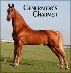 Tennessee Walker | Tennessee Walking Horse information, breed pictures, tennessee walking ...