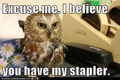 Have you seen my stapler?