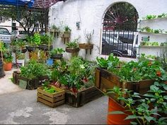 Producir alimentos en casa, Huerta Ecologica.