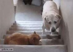 14 Dogs Who Had The Misfortune Of Being Adopted By Cat People (GiFs) - World's largest collection of cat memes and other animals Funny Dogs, Funny Animals, Cute Animals, Animals Dog, Funny Humor, Funny Quotes, Crazy Cat Lady, Crazy Cats, You Shall Not Pass