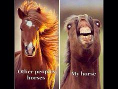 funny horse memes so true ; funny horse memes hilarious so true ; Cute Animal Memes, Funny Animal Quotes, Animal Jokes, Cute Funny Animals, Cute Baby Animals, Funny Cute, Funny Animal Humour, Hilarious Animal Memes, Animals Doing Funny Things