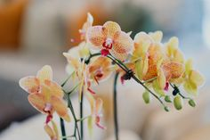 Closeup of beautiful orange orchid Free . Orange Orchid, Purple Orchids, Orange Plant, Abstract Flowers, Watercolor Flowers, Flower Places, Cute Frames, Plant Images, Free Plants