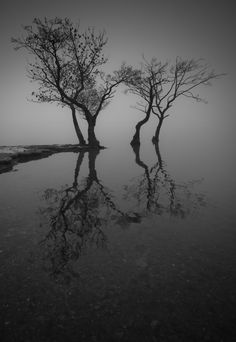 """""""Four of a Kind"""" 