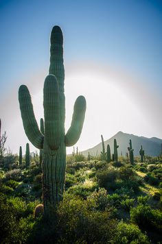 Sonoran Desert, Arizona...one of the largest and hottest deserts in North America