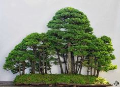 Wonderful forest landscape, image by Michael Bonsai.