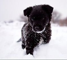 Black Puppy in Snow Cute Puppies, Cute Dogs, Dogs And Puppies, Doggies, Awesome Dogs, Baby Animals, Cute Animals, Black Puppy, Snow Dogs