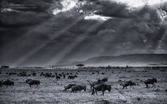 "Photograph ""I bless the rains..."" by Morkel Erasmus"