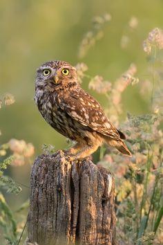 featheroftheowl:  Owl Bouquet by thrumyeye