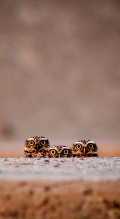 Owls with their cute little eyes peeking out!