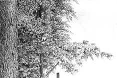 pencil drawing foliage how to draw.uk