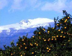 Mt. Hallasan