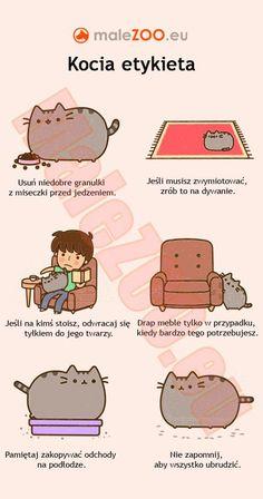 - Funny cats. | MaleZOO.eu