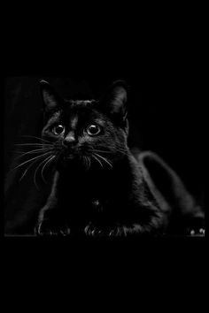 Black on black (original photographer unknown) #photography #portrait #pet_portrait #cat #myt