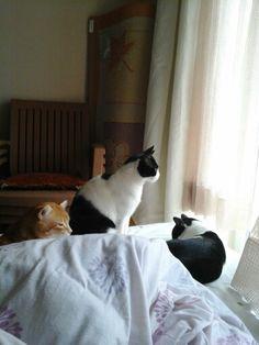 Pür dikkat, dişi kedi gözlenir :))