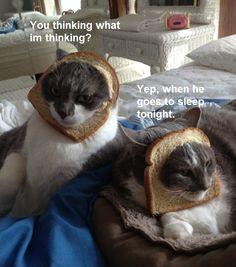 #funny #cats #cute #breading #bread #cat #lol