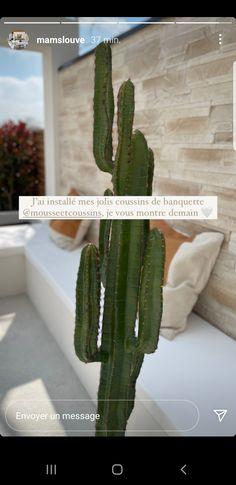 Cactus Plants, Cacti, Cactus