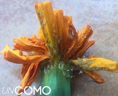 Bič na nenávidené vošky: Stačí im dať tento lacný zázrak toto a vaše rastlinky sú zachránené! Succulents Garden, Home Deco, Vegetables, Plants, Homemade Products, Calendula, Bio, Ideas, Gardens