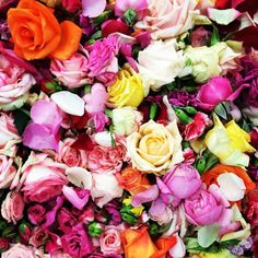 .@Matty Chuah FLOWER DRUM | Last day of flowering for 2013 // onset with @Melanie Bauer Elizabeth creating flower lov... | Webstagram
