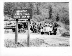 Big log country