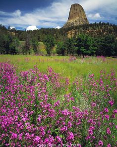 """Devils Tower. Not Devil's Tower. If you are wondering why this huge tower doesn't have an apostrophe, here is why: it was a mistake in the documents declaring it the first National Monument in 1906. The mistake was never corrected and even over a hundred years later we are still misspelling it """"Devils Tower"""" because that's its official name. #DevilsTower #Wyoming #Travel #Fact #BlackHills #NationalMonument #west #Volcano #History http://destinationwesttours.com"""