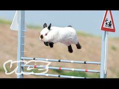 Can You Train A Rabbit? - http://modernfarmer.com/2017/03/can-train-rabbit/?utm_source=PN&utm_medium=Pinterest&utm_campaign=SNAP%2Bfrom%2BModern+Farmer