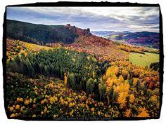 Bodendenkmal im Herbstwald