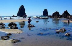 For my next trip: Exploring Tide Pools at Haystack Rock, Cannon Beach, Oregon