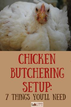 Getting ready to butcher chickens? Let me show you our chicken butchering set up, and show you seven things you will need to make your job easier. Chicken Butchering Set Up: 7 Things You Need - A Farmish Kind of Life The Prairie Homestead ThePrairi Raising Meat Chickens, Keeping Chickens, Fresh Chicken, Chicken Eggs, Backyard Farming, Chickens Backyard, Backyard Birds, Chicken Plucker, Chicken Processing