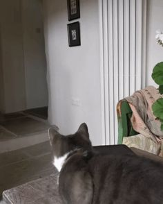 The dog is afraid of the cat - Gif Animals And Pets, Funny Animals, Cute Animals, Cute Cats And Kittens, Kittens Cutest, Funny Cat Videos, Funny Cats, Scared Cat Gif, Cats And Cucumbers