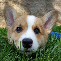 Meet Winston. #imgur