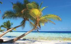 fototapet palmieri