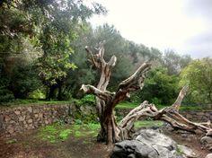 Jardin Botanico Viera y Clavijo, Las Palmas de Gran Canaria
