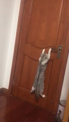 Check out these funny videos of funny cats. This compilation of funny cat videos also has funny cat fails and some funny cat vines. Cute Cats And Kittens, I Love Cats, Crazy Cats, Kittens Cutest, Cute Funny Animals, Cute Baby Animals, Animals And Pets, Funny Cats, Cute Animal Videos