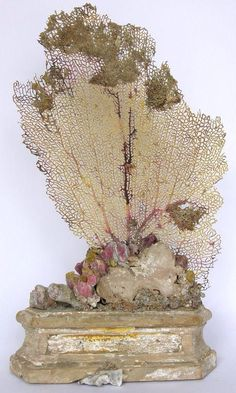 Pinned by Pinner: century Italian altar base (Florence) decorated with a sea fan, barnicals, fossil shells, and coordinating fragments.See these beautiful works from Interi. Seashell Art, Seashell Crafts, Art Decor, Decoration, Beach Cottages, Beach House Decor, Beach Art, Oeuvre D'art, Coastal Decor
