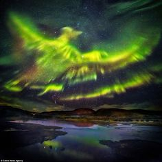 White Wolf : The Northern Lights take on the form of the legendary bird over Iceland