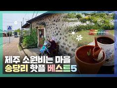 [제주여행/송당리] 소원비는 마을, 구좌 송당리 당일치기 코스 추천 : 네이버 포스트 Plants, Planters, Plant, Planting