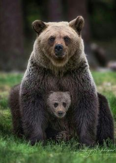 Beautiful Mother and Cub!