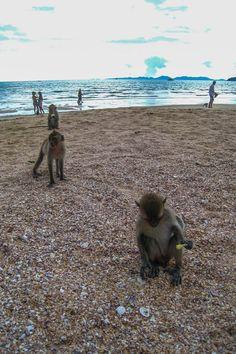Monkeys on the beach in Krabi, Thailand. So cute and friendly!