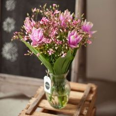 5 Curcuma & 15 Saponaria  BLOOMY DAYS - fresh flowers delivered. The first online-based cut-flower-subscription for private and business customers!