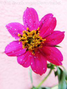 www.dacsanmientrng.info liked Flower.