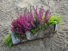 kompozycje na cmentarz - Szukaj w Google Japanese Garden, Garden Containers, Plants, Dried Flowers, Flower Arrangements, Front Landscaping, Wood Flowers, Fall Flowers, Cemetery Flowers