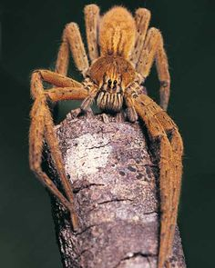 http://animals.howstuffworks.com/arachnids/arachnid-pictures.htm