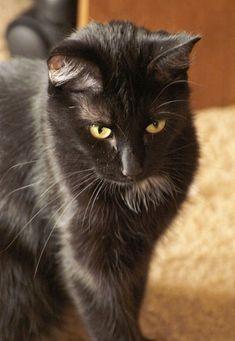 A Good Luck Black Cat