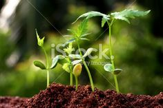 Plant evolution - New life Royalty Free Stock Photo