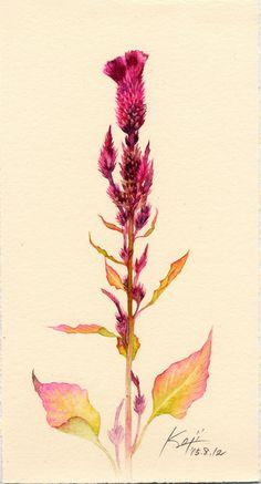 Botanical Art: ケイトウ/楠瀬康璽 Koji_s044_72.jpeg (432×801)