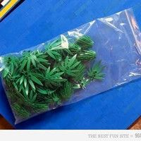 The legolization of marijuana - LEGO/lol Lego Humor, Bizarre Pictures, Best Funny Pictures, Funny Photos, Saturday Pictures, Saturday Humor, Funny Jokes, Hilarious, Baywatch