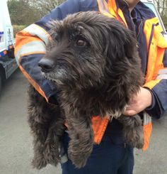 This dog has been found on the M5 Strensham Worcestershire, The dog isn't chipped