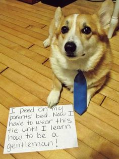 I peed on my parents bed. Now I have to wear this tie until I learn how to be a gentleman.